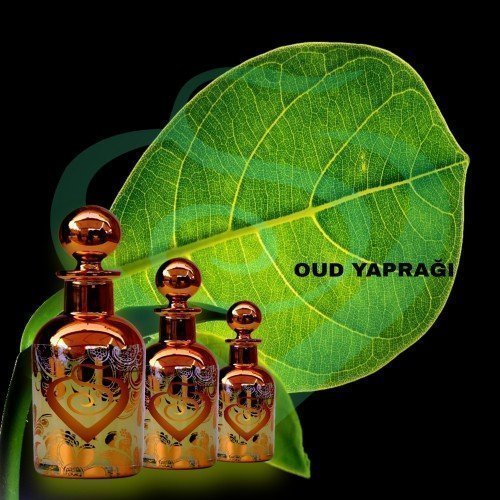 Oud Yaprağı Kokusu